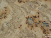 Granite Colors Phoenix lapidus 2cm
