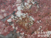 Granite Colors Phoenix Red Bahia